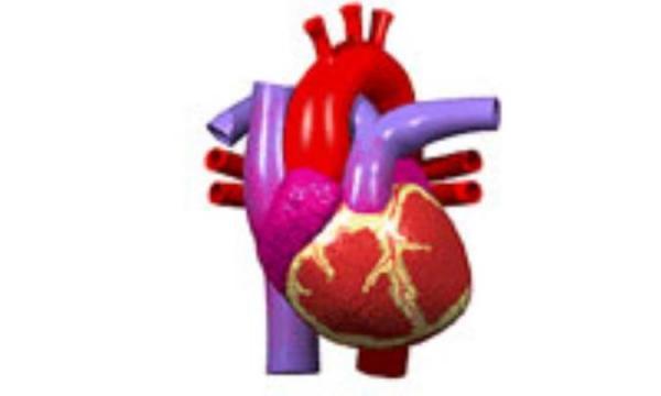 درباره قلب تان بیشتر بدانید